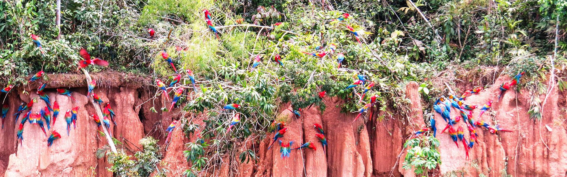 Selva Cultural y de Aventura