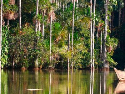 Perú Magic Jungle